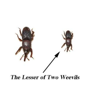 Predictable weevil pun. (Image: funnyphotos.net.au)